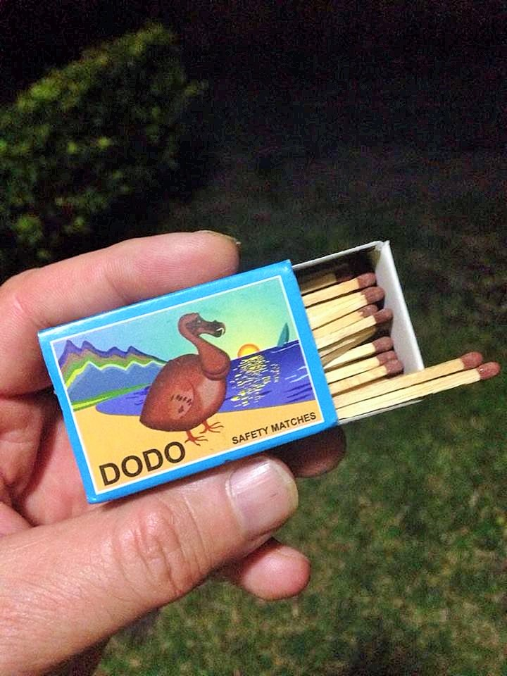 Dodo 4