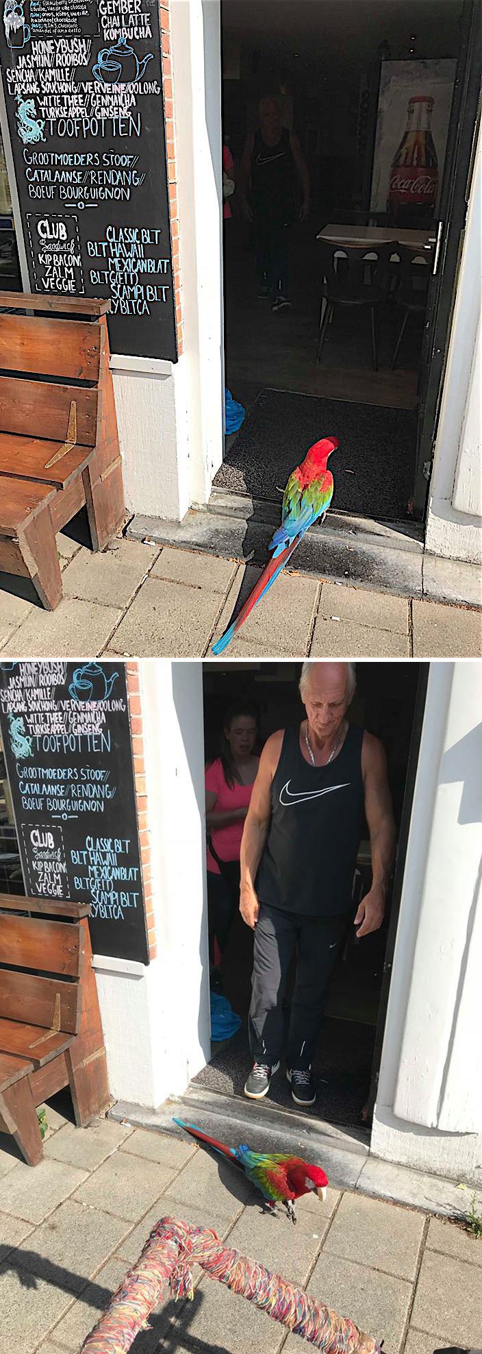 Papegaai iets anders